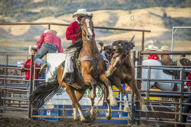 Bozeman, MT, USA - August 12, 2016: cowboy pickup man with bucking bronco in arena