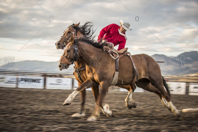 Bozeman, MT, USA - August 12, 2016: cowboy pickup man loosening saddle from bucking bronco while at a gallop