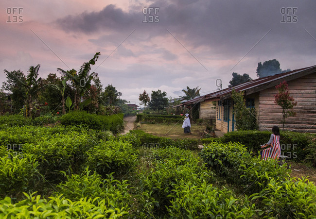 Kerinci Valley, Sumatra, Indonesia - February 21, 2015: At dusk with a colorful sky overhead, a young girl rides her bike near houses and a tea plantation in Sumatra, Indonesia.
