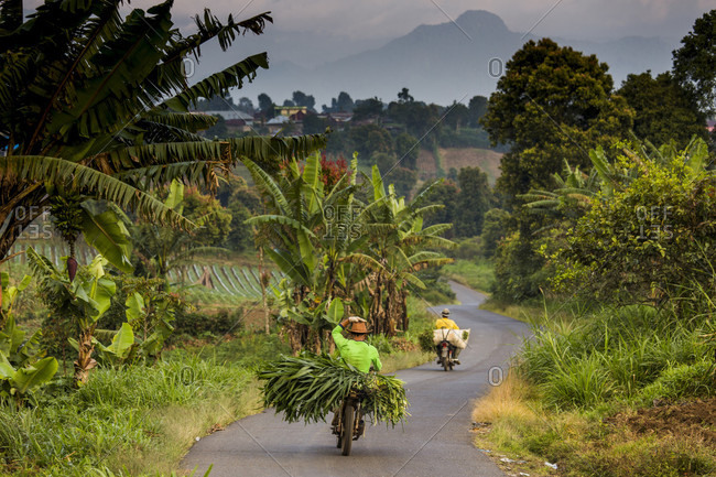 Kerinci Valley, Sumatra, Indonesia - February 24, 2015: A pair of farmers ride motorcycles loaded in produce down a winding dirt road in the lush Kerinci Valley of Sumatra, Indonesia.