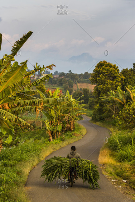 Kerinci Valley, Sumatra, Indonesia - February 24, 2015: A farmer rides a motorcycle loaded in produce down a winding dirt road in the lush Kerinci Valley of Sumatra, Indonesia.