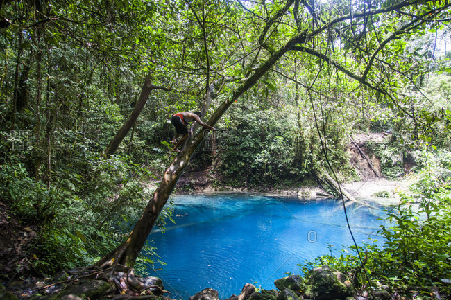 Kerinci Valley, Sumatra, Indonesia - February 26, 2015: A man climbs a tree before jumping into a crystal clear sapphire pool shrouded in jungle. Kerinci Valley, Sumatra, Indonesia.