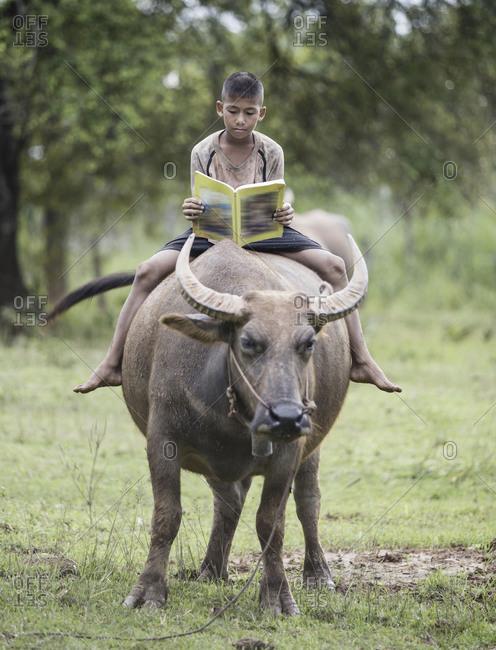 Boy reading book with him buffalo, Thailand