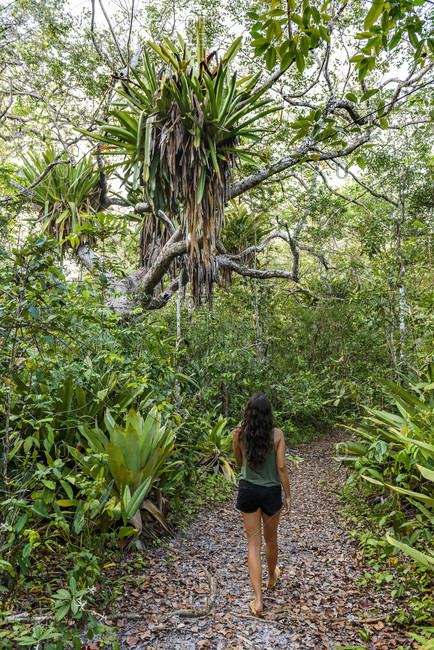 Rear view of woman walking on footpath in tropical scenery with giant bromeliads in Taipu de Fora, South Bahia, Brazil