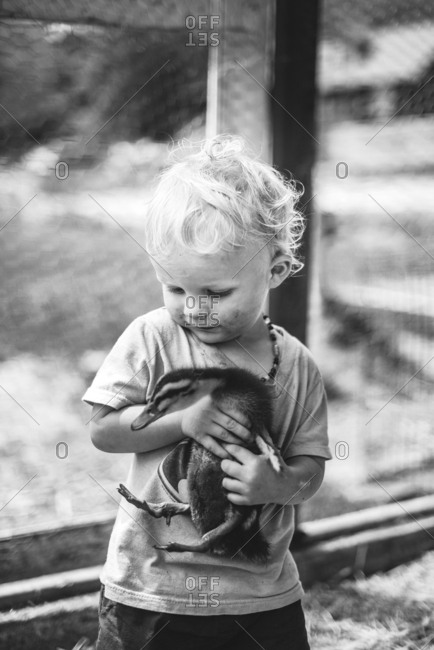 Toddler holding baby duck
