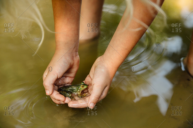 Child holds a frog over a mud puddle