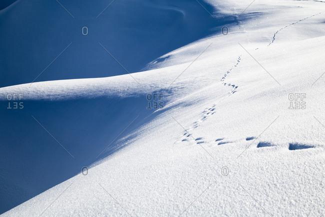 Animal tracks on a snowy mountain peak