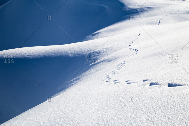Animal tracks on a snowy mountain peak