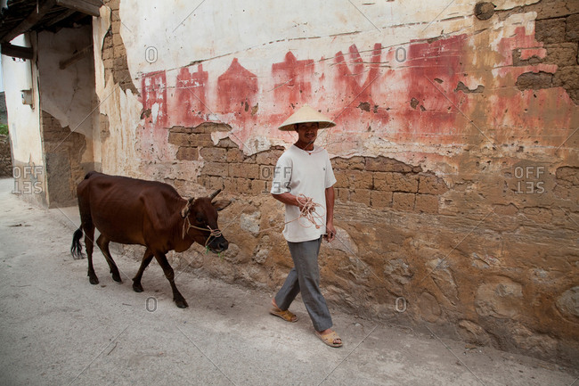 Guilin, China - August 7, 2017: China, Guilin  Farmer walking cow through village