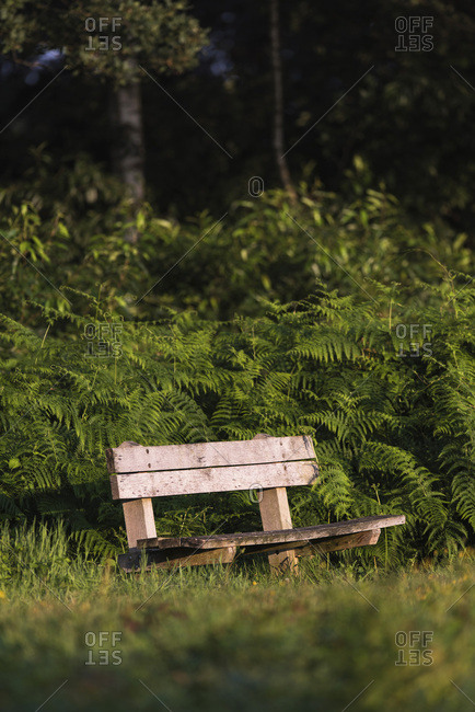 Wooden bench between ferns lit by morning sun