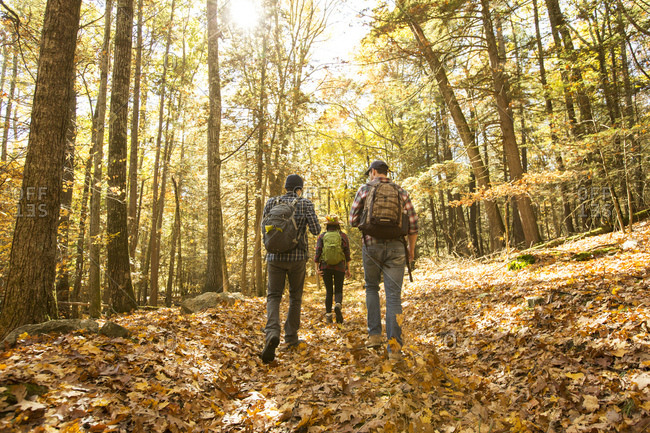 Rear view of male and female friends with backpacks hiking in forest during autumn
