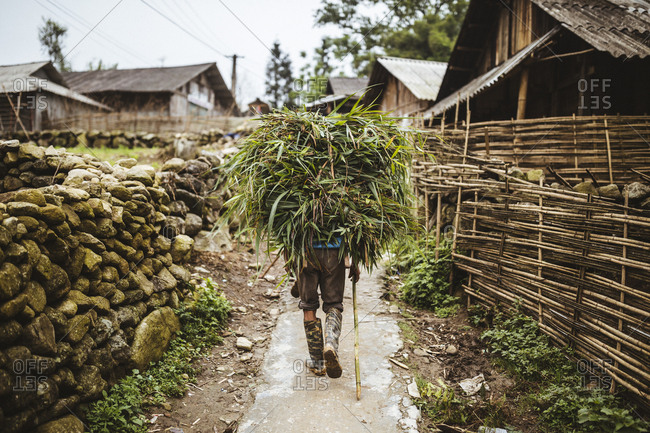 Men carry bundles of bamboo leaves down a small village road in northern Vietnam.