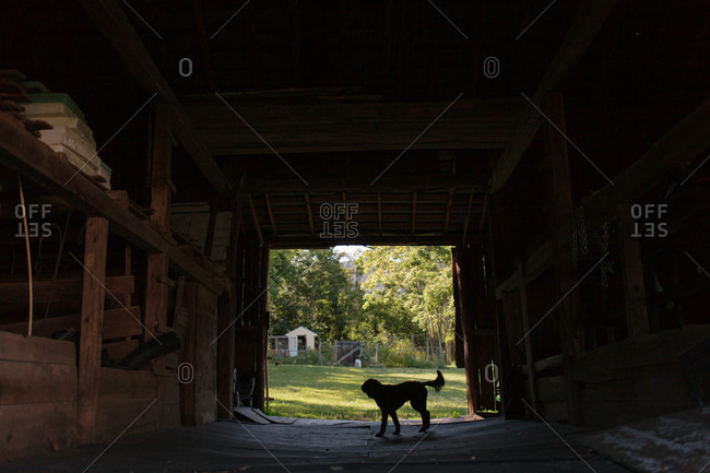 Silhouette of a dog standing in the doorway of a rustic old barn