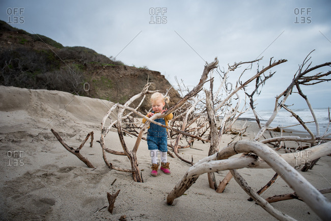Toddler girl exploring driftwood tree on beach