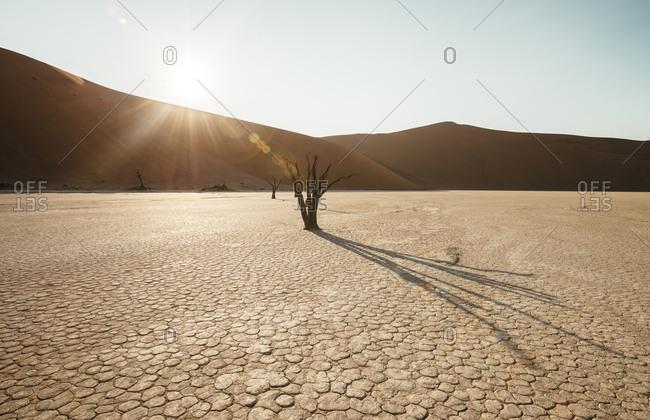 Bare trees in desert landscape of Deadvlei.