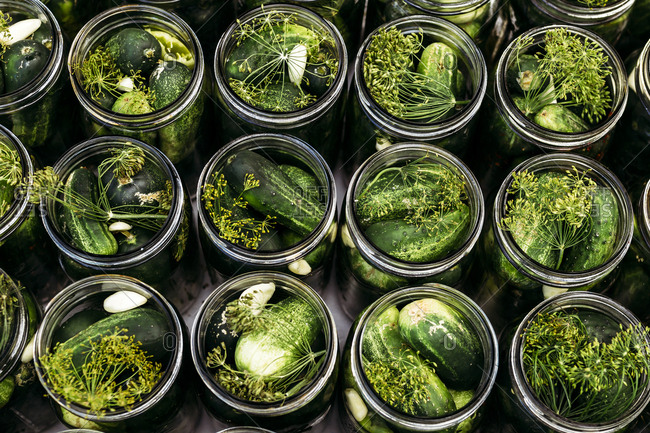 Canning jars filled with cucumbers and seasonings in preparation for making pickles
