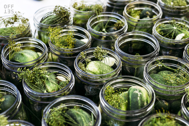 Canning jars filled with fresh herbs and cucumbers in preparation for making pickles