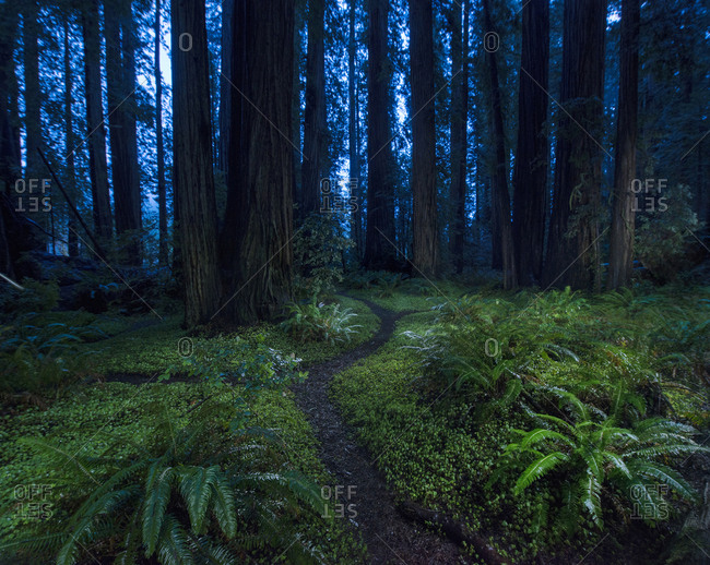 Tranquil view of forest at Jedediah Smith Redwoods State Park