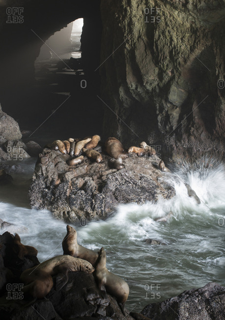 High angle view of sea lions on rocks in cave
