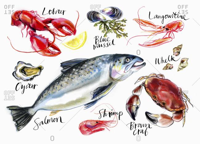 Variation of seafood