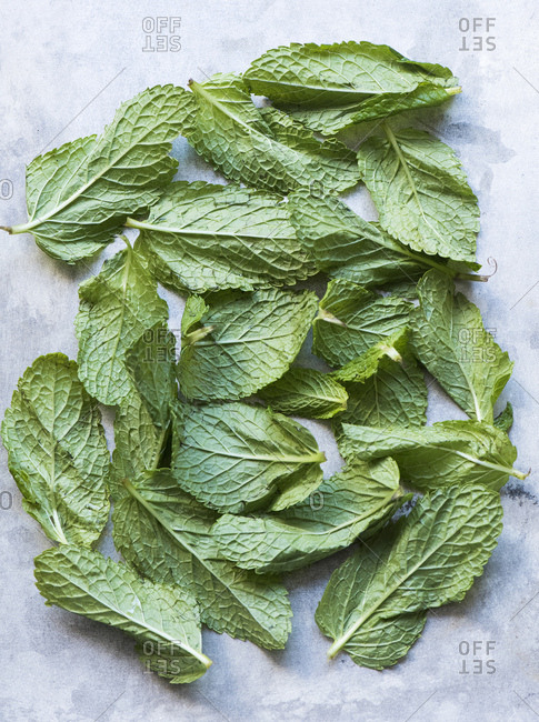 Overhead view of mint leaves