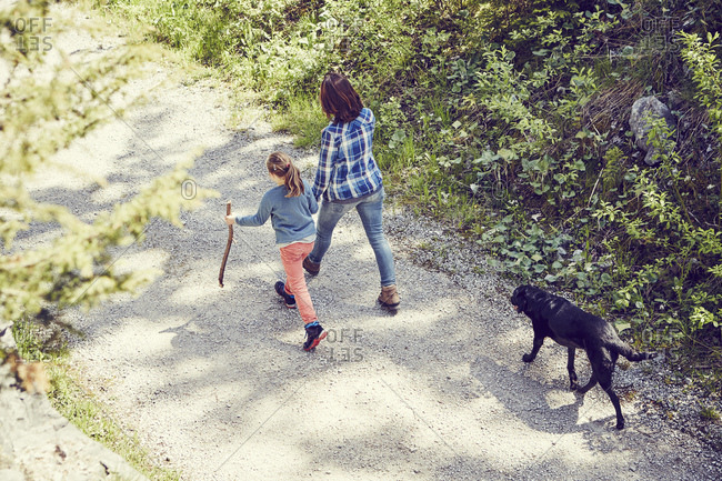Mother and daughter walking through forest, hand in hand, dog walking behind, rear view