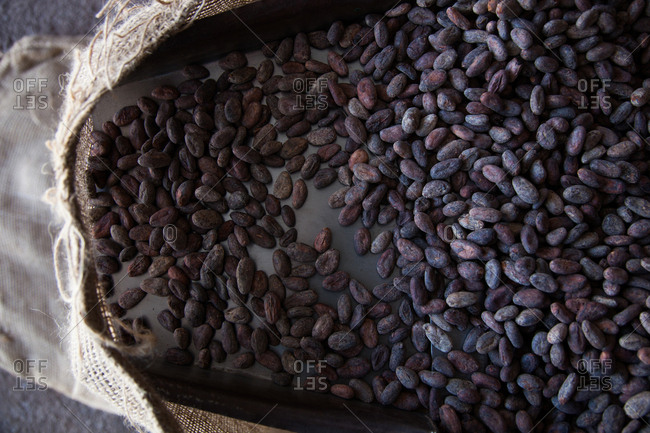 Cocoa beans on a chute pouring into a burlap bag