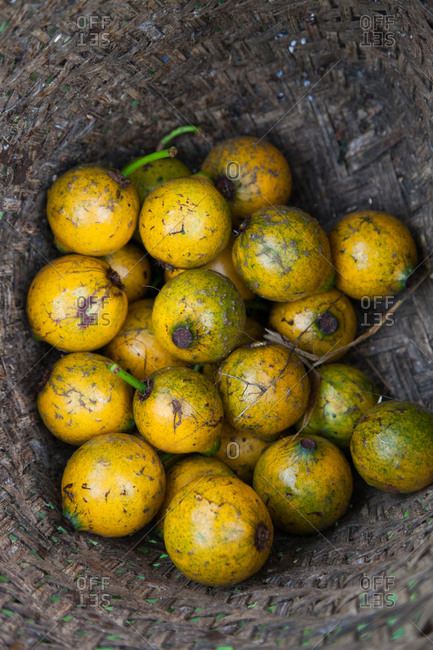 Harvested yellow passion fruit at the bottom of a woven basket