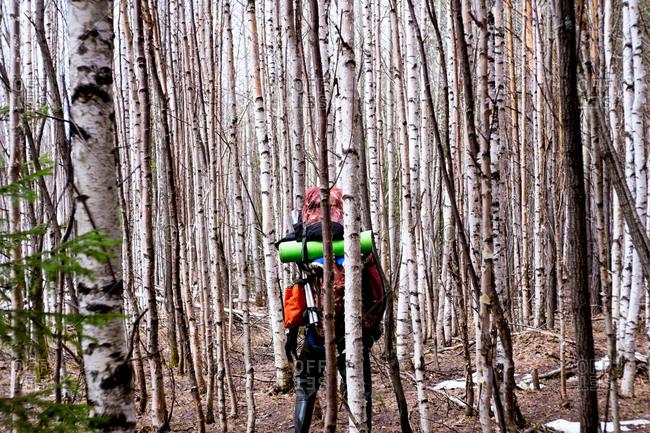 Hiker hiking through trees in forest, Bolshoy Ural, Sverdlovsk, Russia, Europe