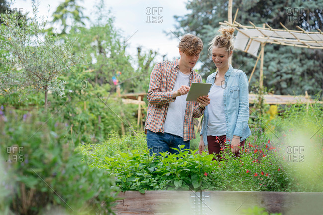 Young man and woman in urban garden, photographing plants using digital tablet