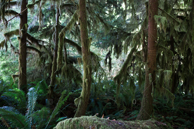 Forest with moss covered trees