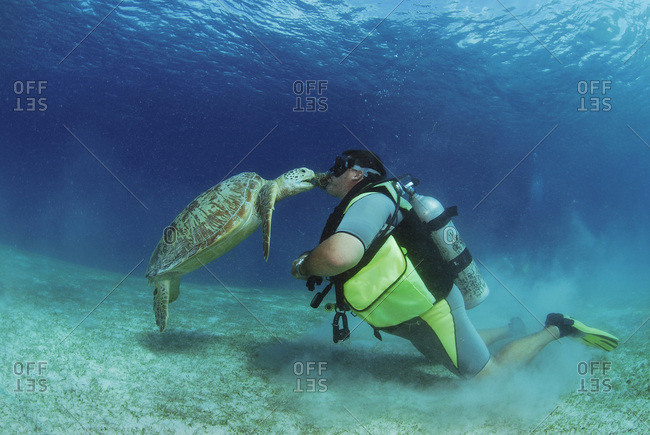 Philippines- scuba diver with green turtle- underwater view