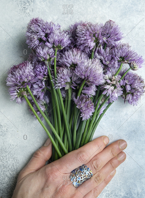 A bouquet of chive blossoms