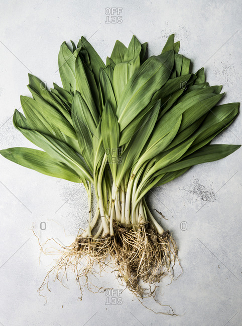 A bunch of spring ramps