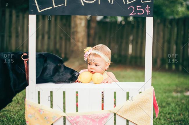 Dog sniffs lemons at lemonade stand