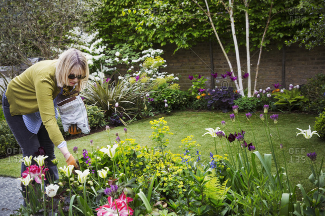Woman standing in a garden, looking at flowers in a flowerbed