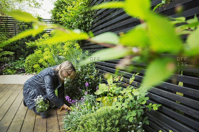Woman kneeling on a wooden deck, planting flower in a flowerbed