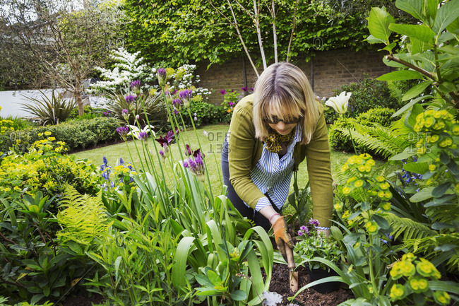 Woman standing in  a garden, holding a gardening trowel, digging in between flowers in a flowerbed