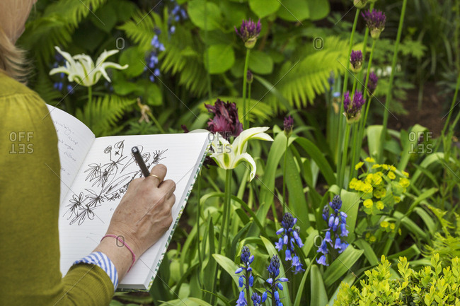 Over the shoulder view of a woman sitting in a garden by a flowerbed, drawing in a sketchbook