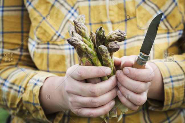 Close up of person holding a bunch of green asparagus and a knife