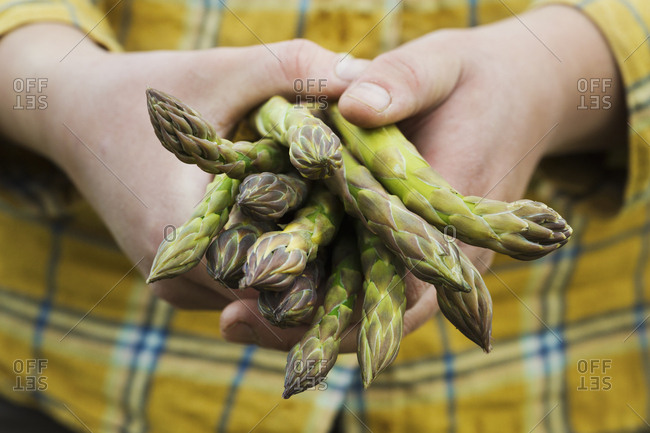 Close up of person holding a bunch of green asparagus