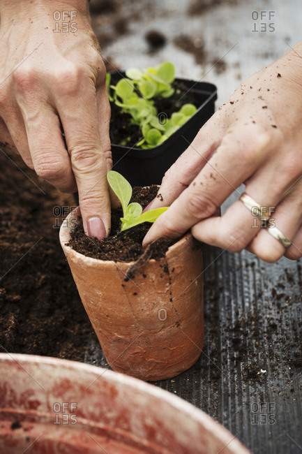 Close up high angle view of person planting a seedling in a terracotta flower pot
