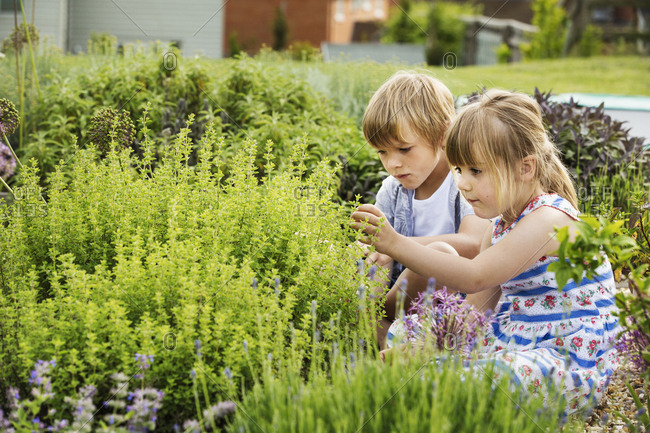 Boy and girl kneeling side by side by a shrub in a garden