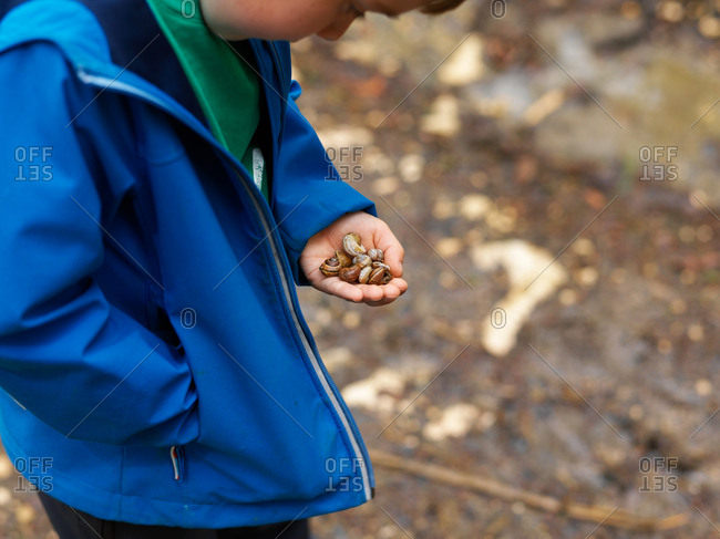 A young boy looking a his hand holding a lot of snail captured on a wooden trail