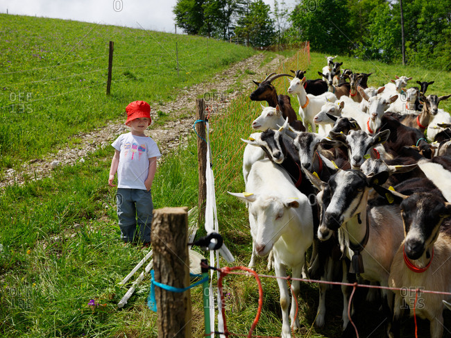 A young girl with a red hat standing near a goat herd along a trail in the French jura