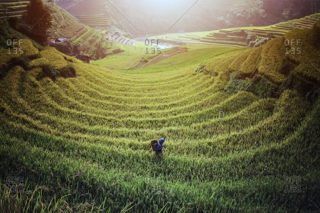 Vietnam Rice fields on terraced of Mu Cang Chai, YenBai, Vietnam