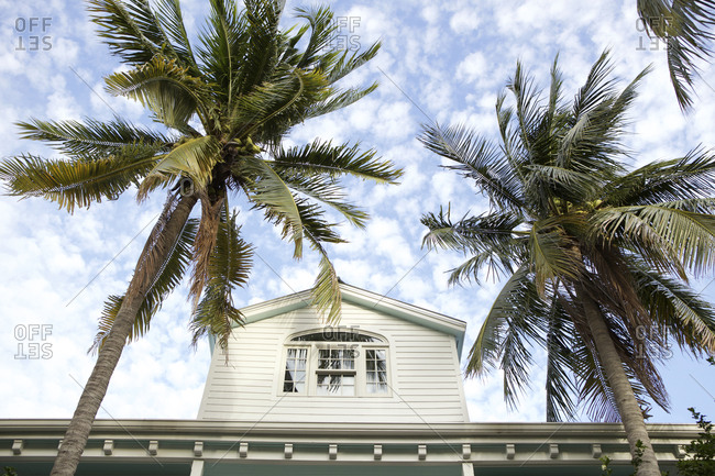 Second story house window and palm trees against a blue sky