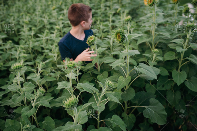 Boy standing in a field of sunflowers