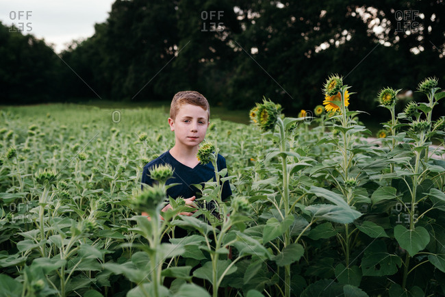 Boy standing in a field of sunflowers at sunset