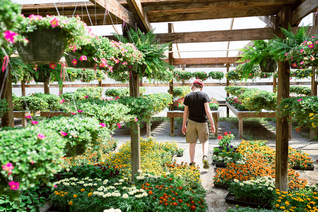 Boy walking among flowers in a nursery greenhouse